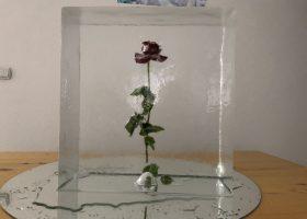 Ruža u ledenom bloku